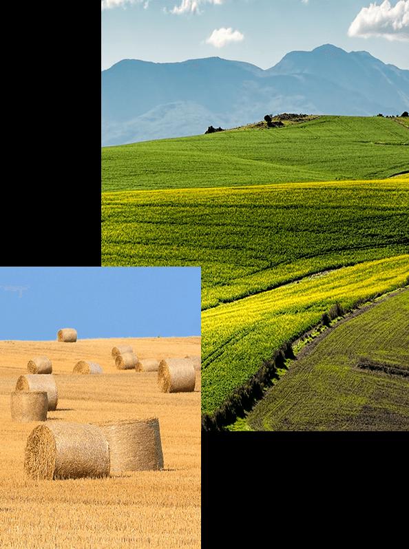 שיווק והפצת תשומות לחקלאות